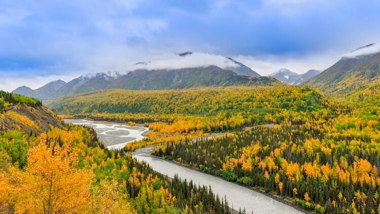 Yellow Fall Foliage in Alaska