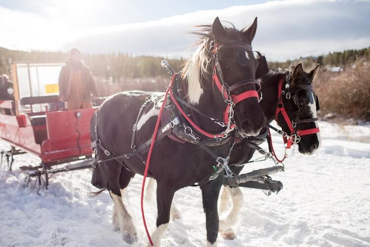 sleigh ride with two horses pulling