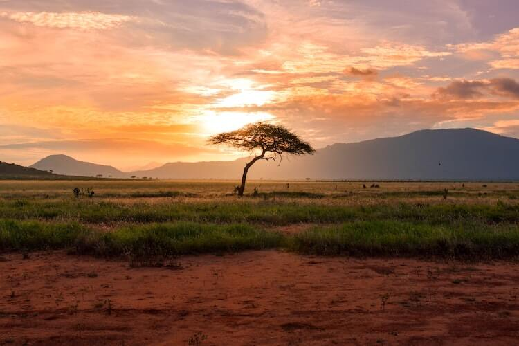 African savannah at sunset with a tree in the foreground and mountains in the background