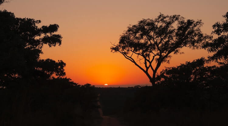 African savannah at sunset with trees in the foreground