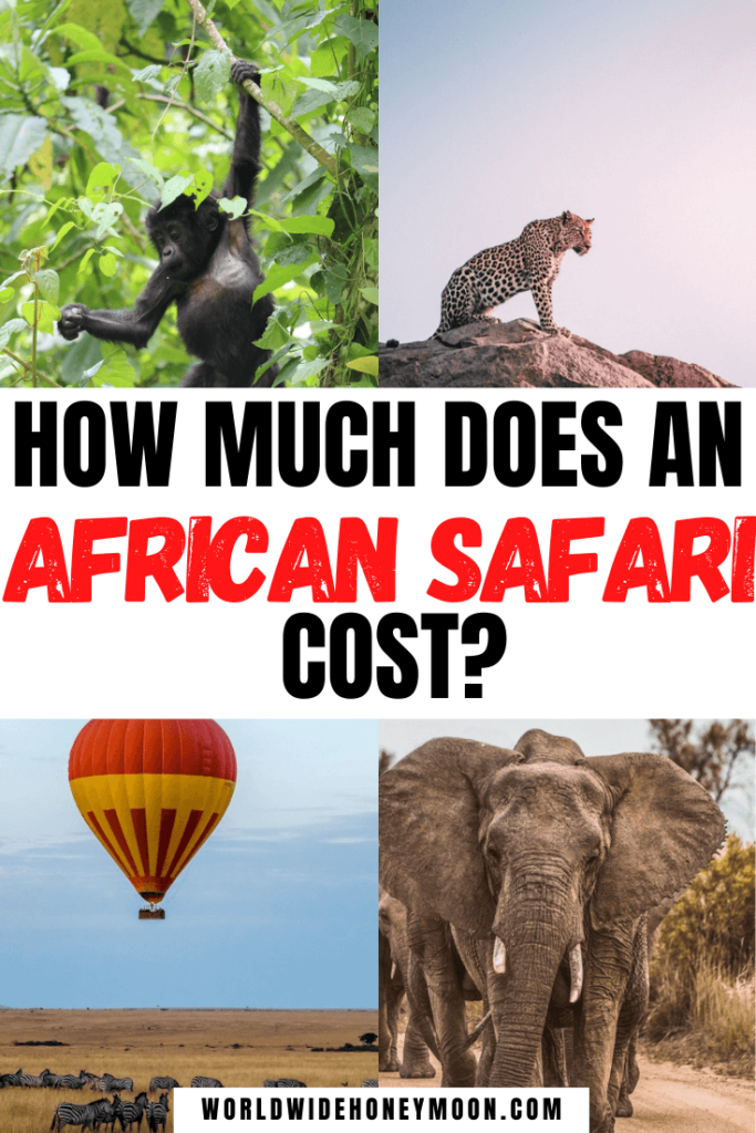 How Much Does An African Safari Cost (1)