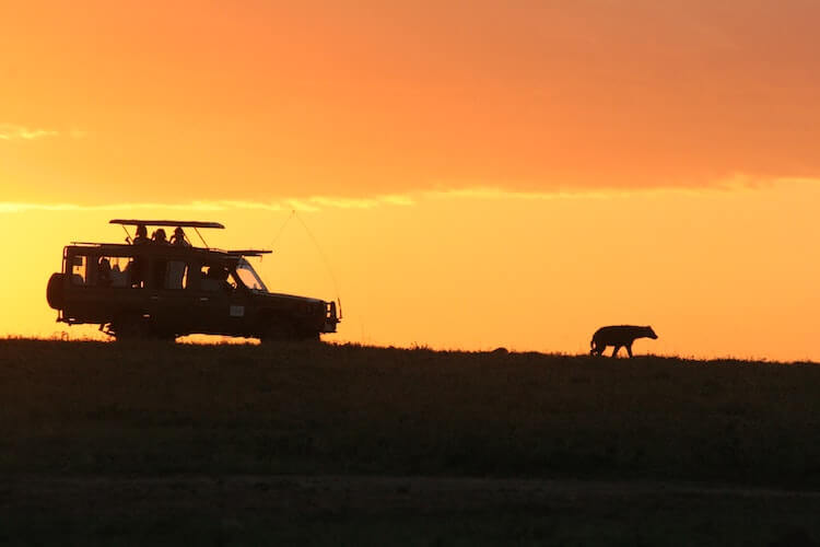 How Much Does An African Safari Cost- Safari vehicle following a hiena