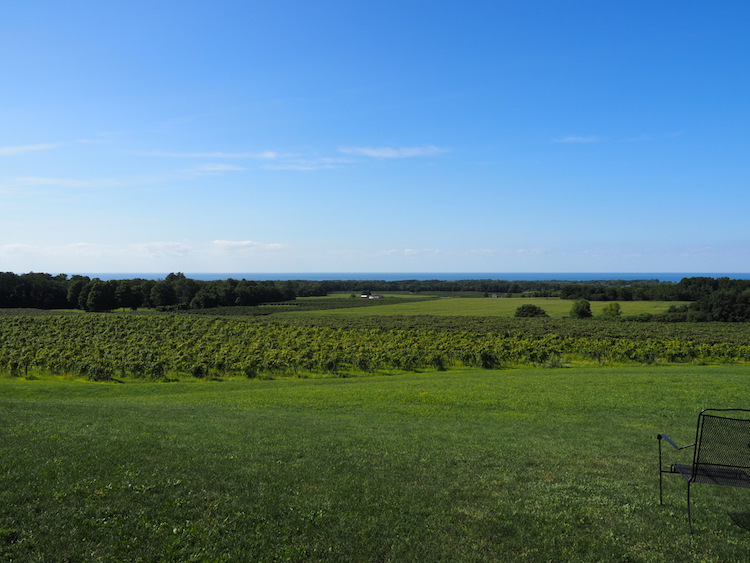 Noble Winery   Best Wineries on the Lake Erie Wine Trail   vineyard with Lake Erie in the background