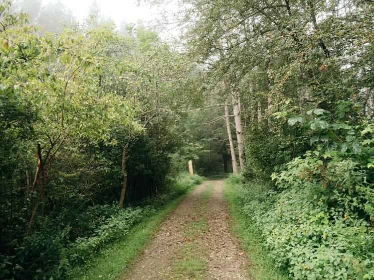 Trail on a foggy morning | Things to do at Chautauqua Lake
