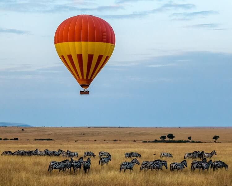 hot air balloon over the African savannah with zebras below