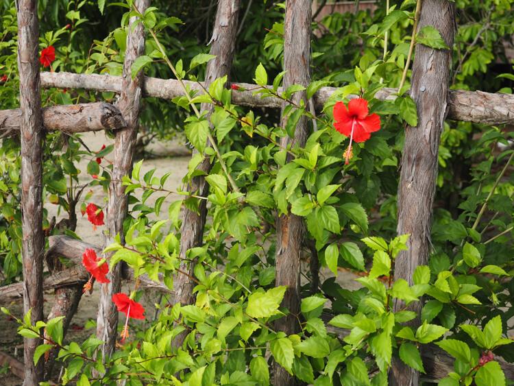 Flowers in Hopkins
