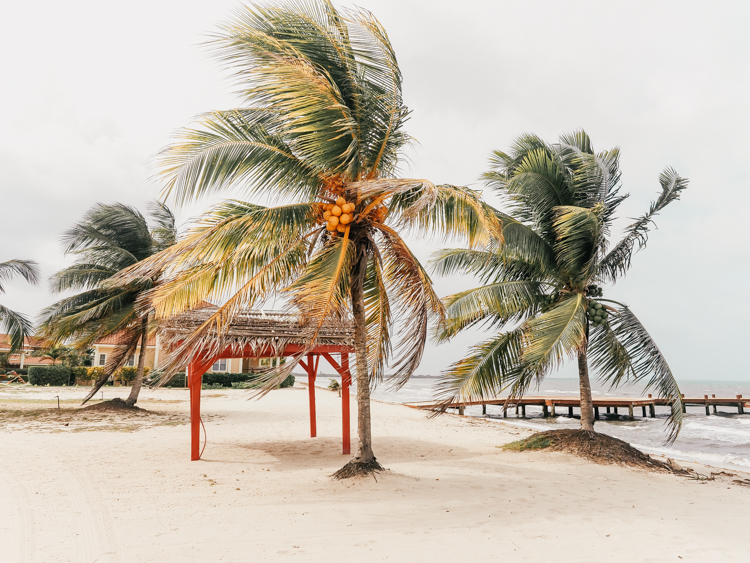 Palm trees in the wind at Hopkins Bay Resort